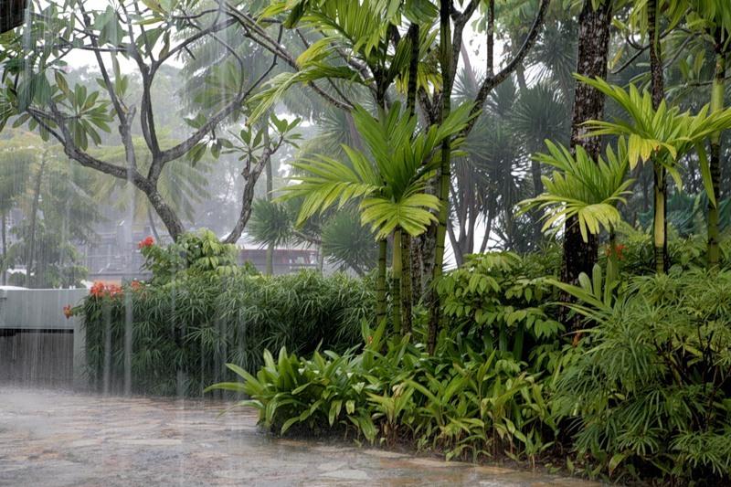 Таиланд ливни